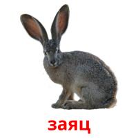 заяц picture flashcards