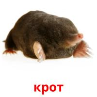 крот picture flashcards