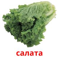 салата picture flashcards