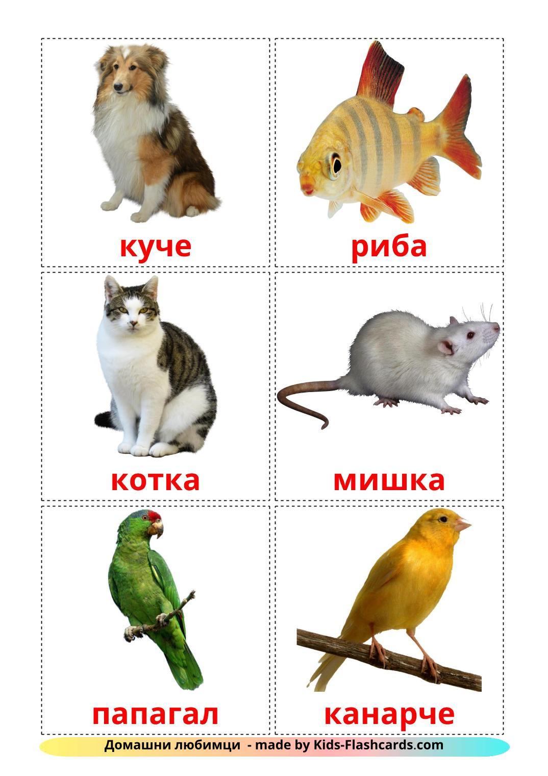Domestic animals - 10 Free Printable bulgarian Flashcards