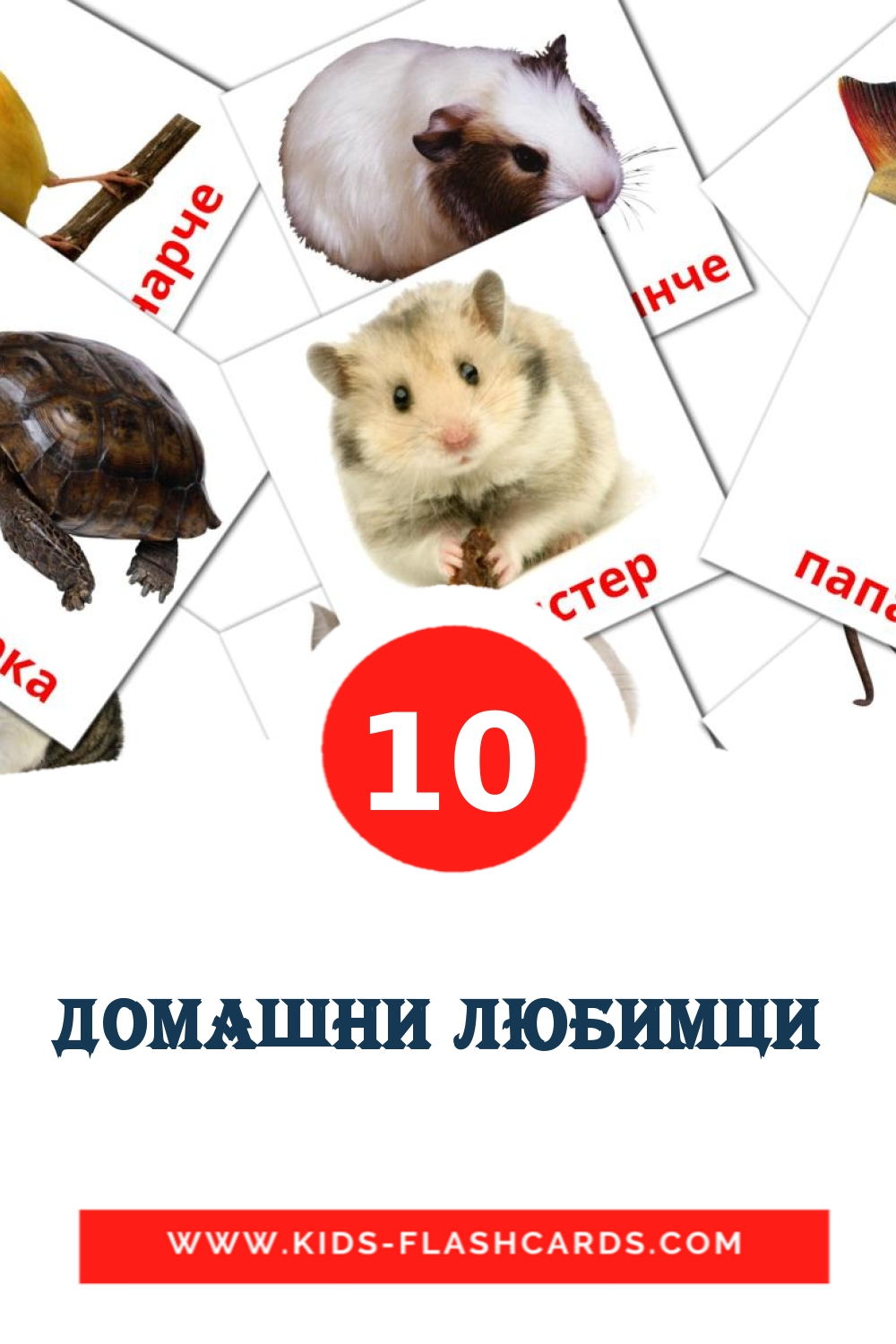 10 Домашни любимци  Picture Cards for Kindergarden in bulgarian