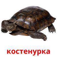 костенурка picture flashcards