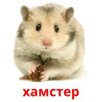 хамстер picture flashcards