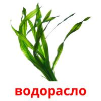 водорасло picture flashcards