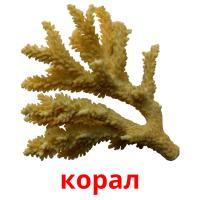 корал picture flashcards