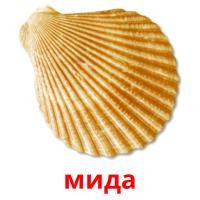 мида picture flashcards