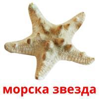морска звезда picture flashcards