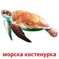 морска костенурка picture flashcards
