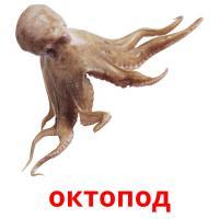 октопод picture flashcards