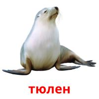 тюлен picture flashcards