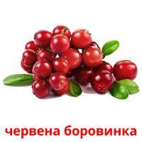 червена боровинка picture flashcards