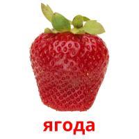 ягода карточки энциклопедических знаний