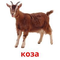коза picture flashcards