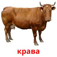 крава picture flashcards