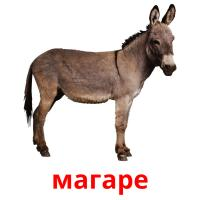 магаре picture flashcards
