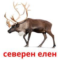 северен елен picture flashcards