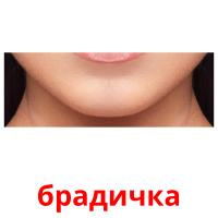 брадичка picture flashcards