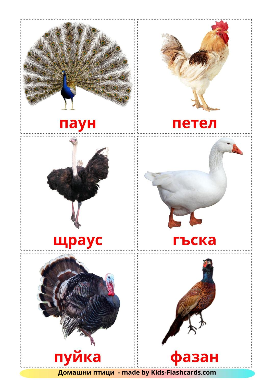 Farm birds picture cards for Kindergarden in bulgarian