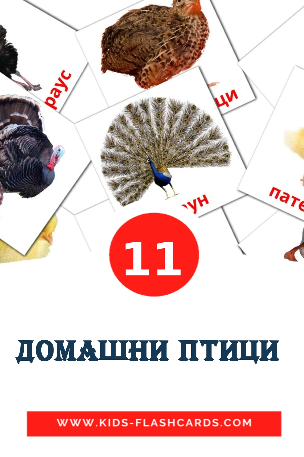 11 Домашни птици  Picture Cards for Kindergarden in bulgarian