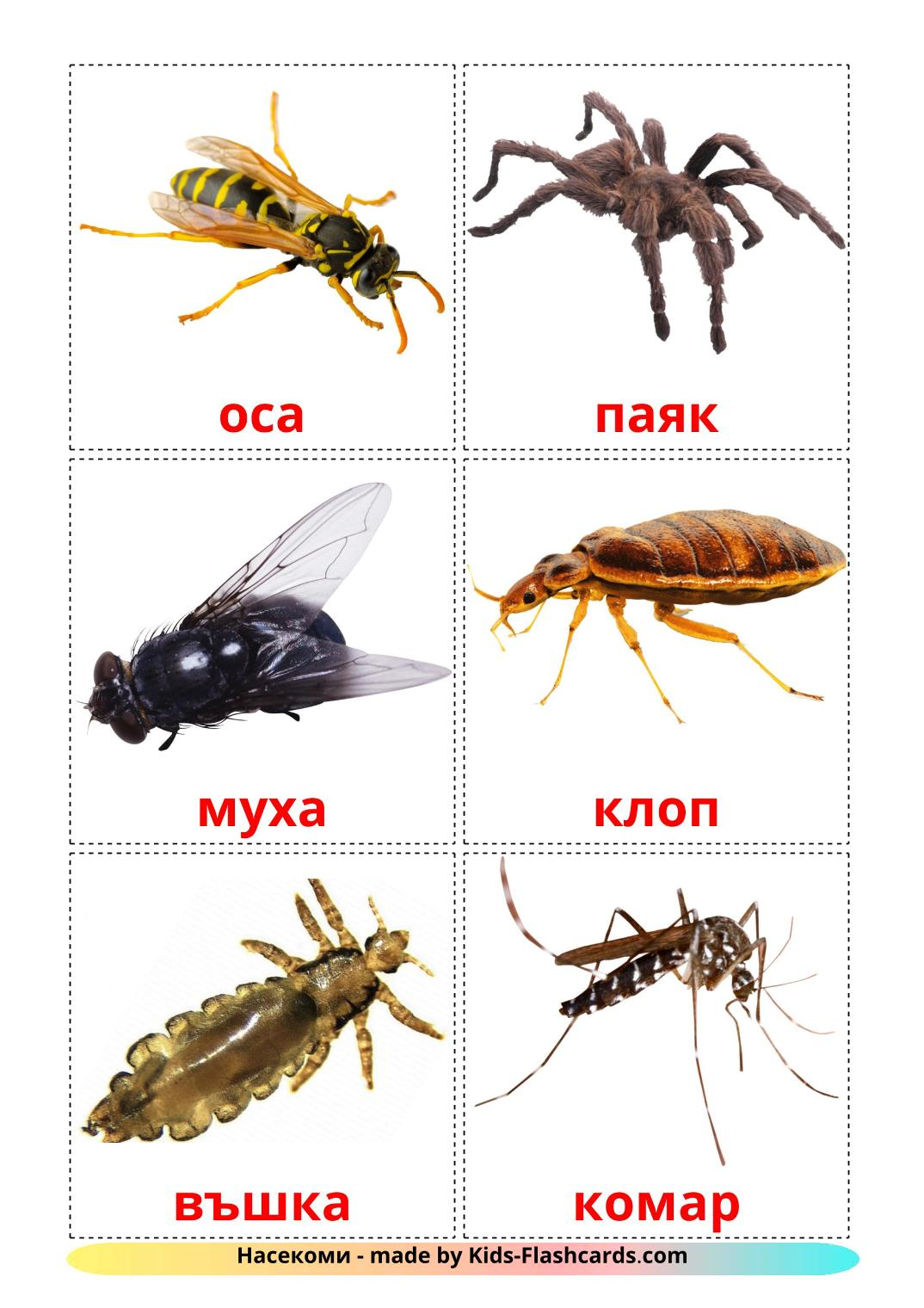 Insects - 23 Free Printable bulgarian Flashcards