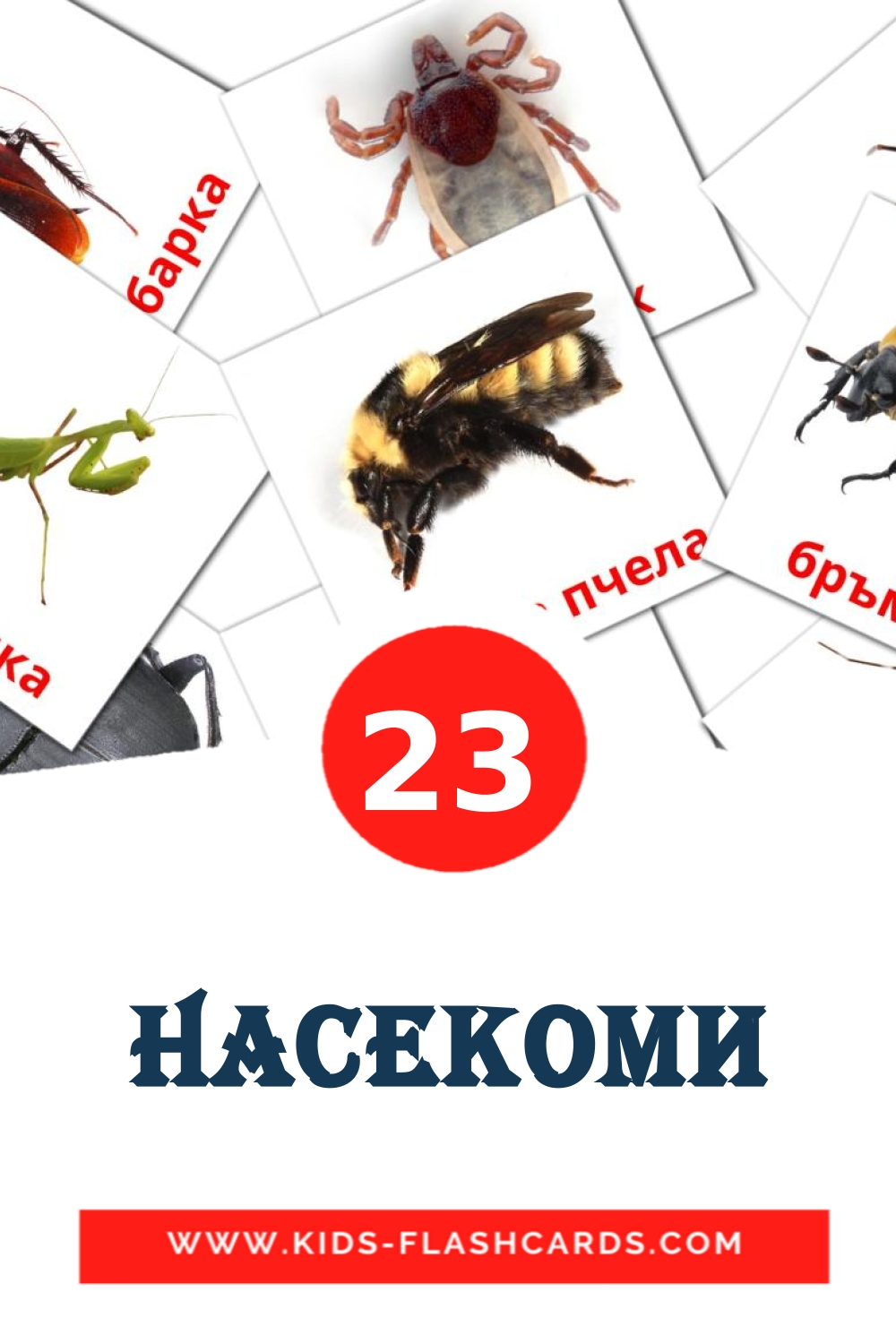 23 Насекоми Picture Cards for Kindergarden in bulgarian