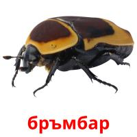 бръмбар picture flashcards