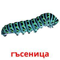 гъсеница picture flashcards