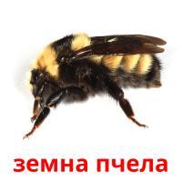 земна пчела picture flashcards