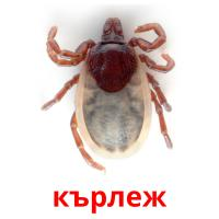 кърлеж picture flashcards