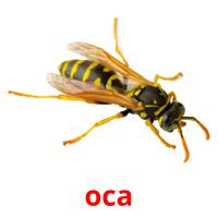 оса picture flashcards