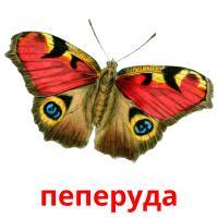 пеперуда picture flashcards