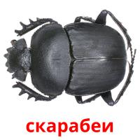 скарабеи picture flashcards