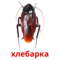 хлебарка picture flashcards