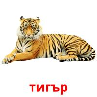тигър picture flashcards