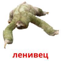 ленивец picture flashcards
