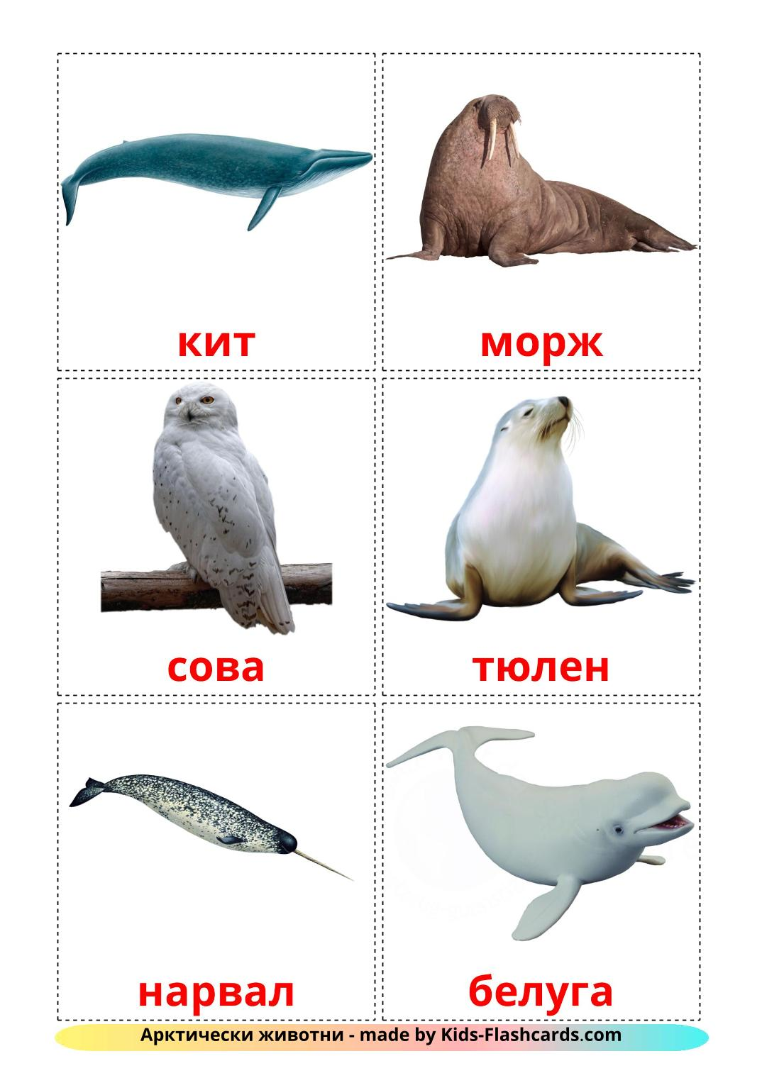 Arctic animals - 14 Free Printable bulgarian Flashcards