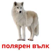 полярен вълк picture flashcards