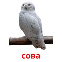 сова picture flashcards