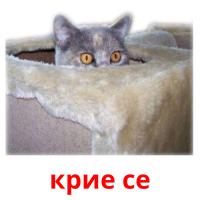 крие се picture flashcards