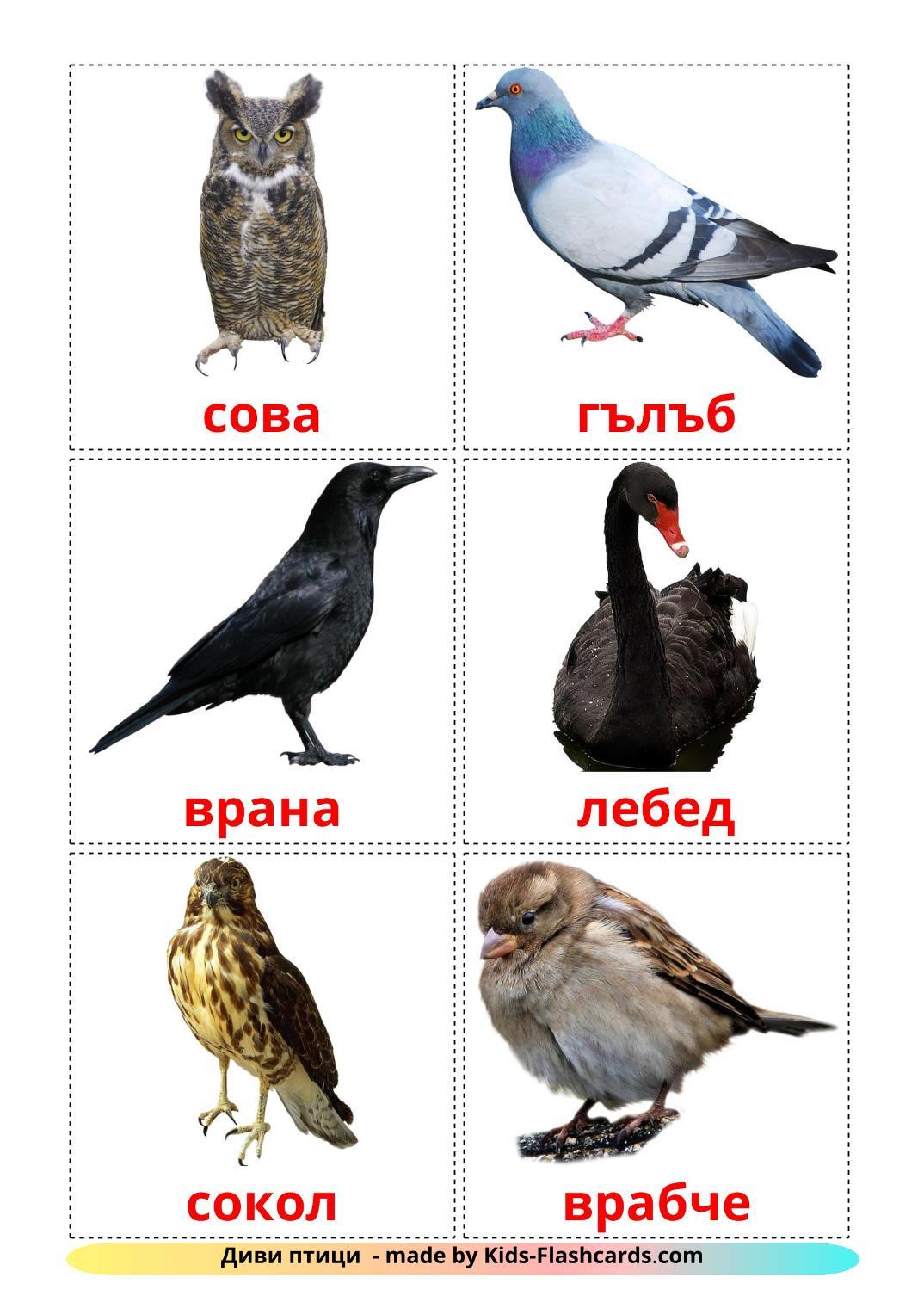 Wild birds - 17 Free Printable bulgarian Flashcards