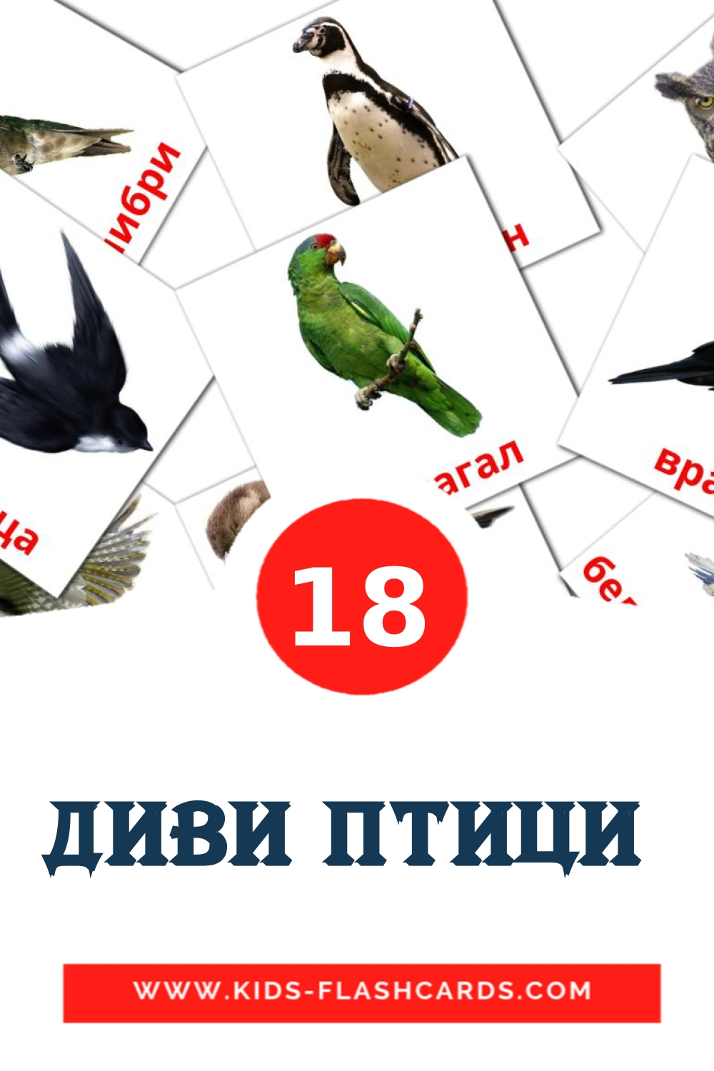 18 Диви птици  Picture Cards for Kindergarden in bulgarian