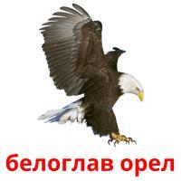 белоглав орел picture flashcards