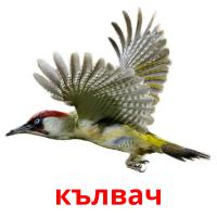 кълвач picture flashcards