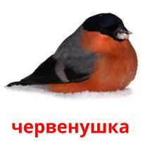 червенушка picture flashcards