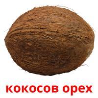 кокосов орех picture flashcards
