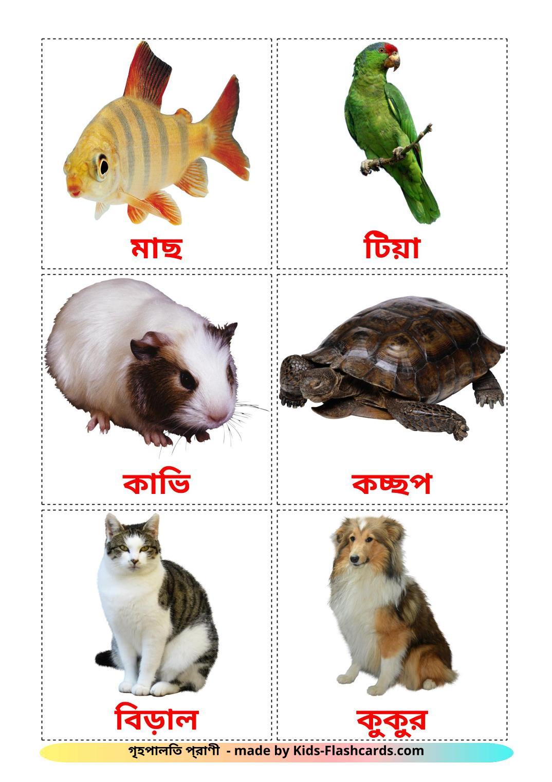 Domestic animals - 10 Free Printable bengali Flashcards