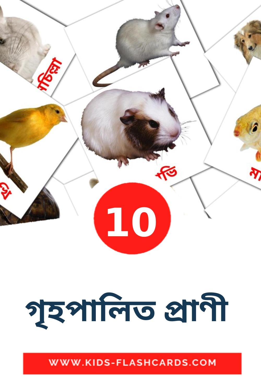 10 গৃহপালিত প্রাণী  Picture Cards for Kindergarden in bengali