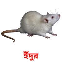 ইঁদুর picture flashcards