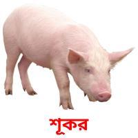 শূকর picture flashcards