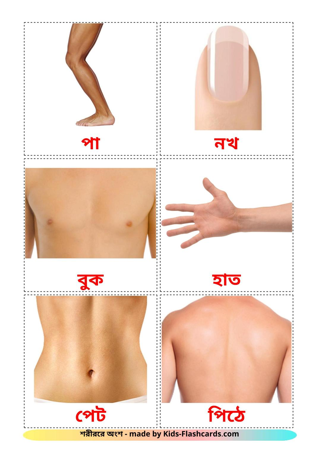Body Parts - 26 Free Printable bengali Flashcards